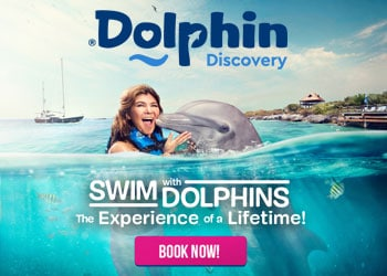 Dolphin Discovery Coupon Deal